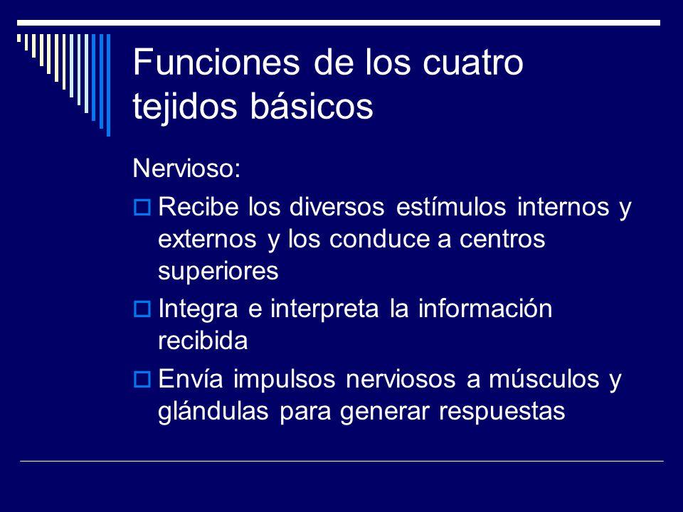 Funciones de los cuatro tejidos básicos