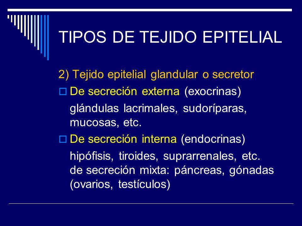 TIPOS DE TEJIDO EPITELIAL