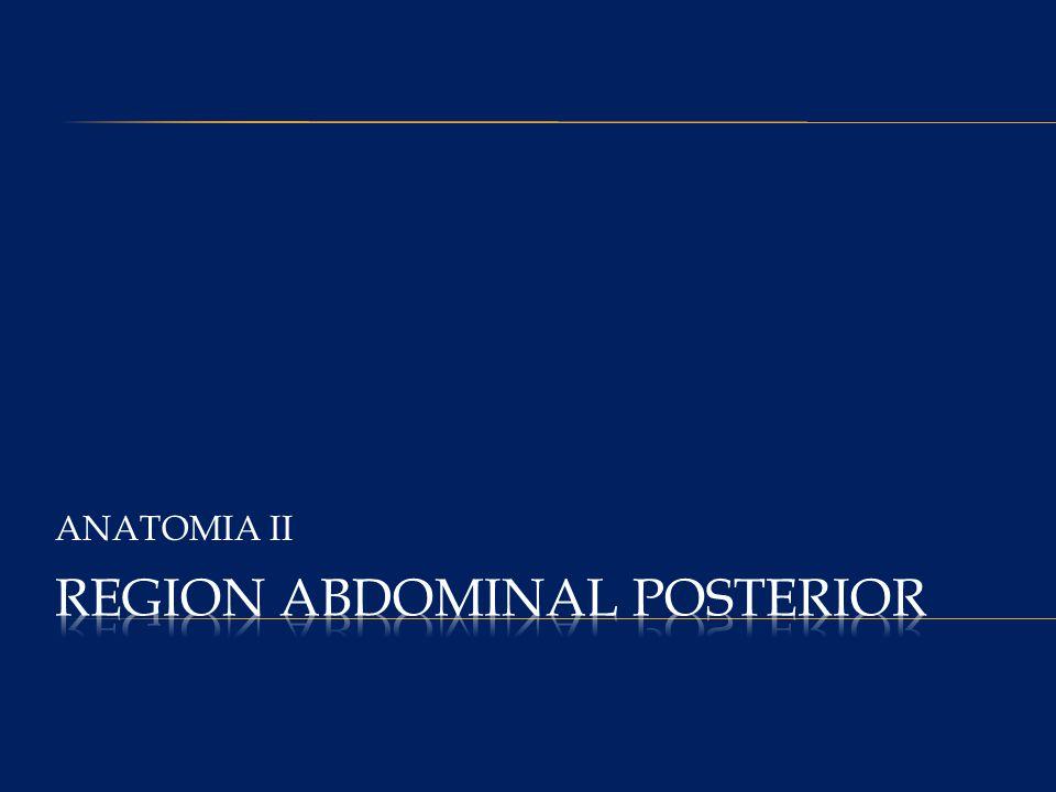 REGION ABDOMINAL POSTERIOR