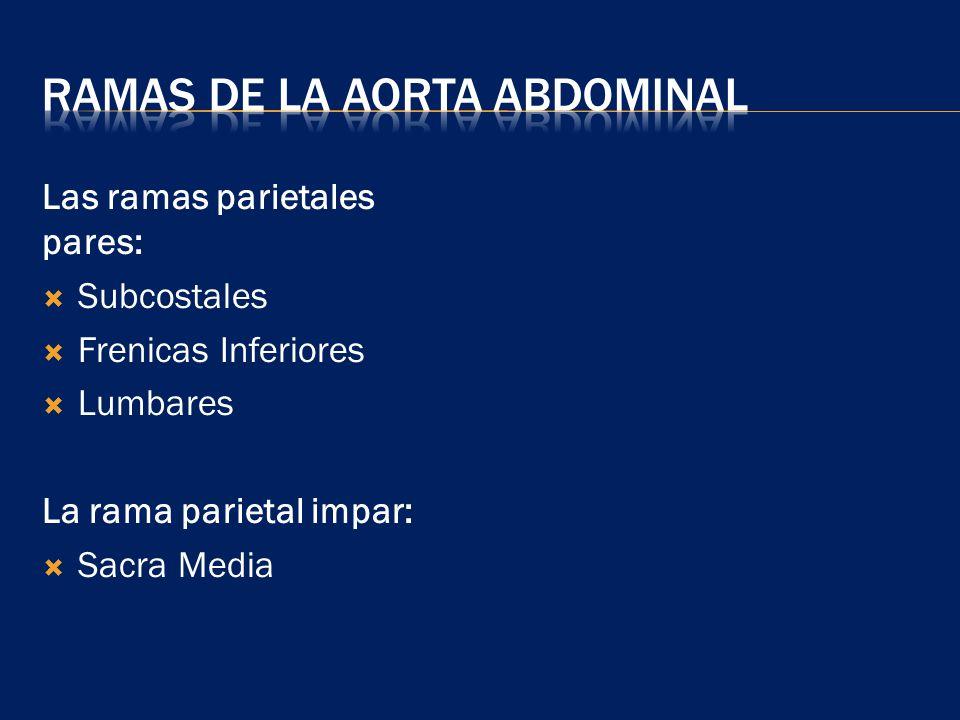 Ramas de la Aorta Abdominal