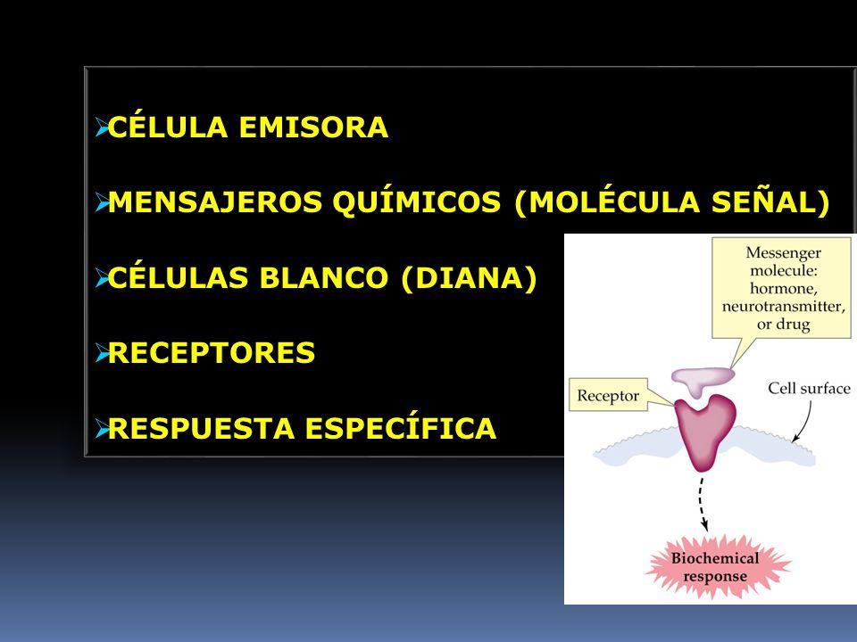 CÉLULA EMISORA MENSAJEROS QUÍMICOS (MOLÉCULA SEÑAL) CÉLULAS BLANCO (DIANA) RECEPTORES.