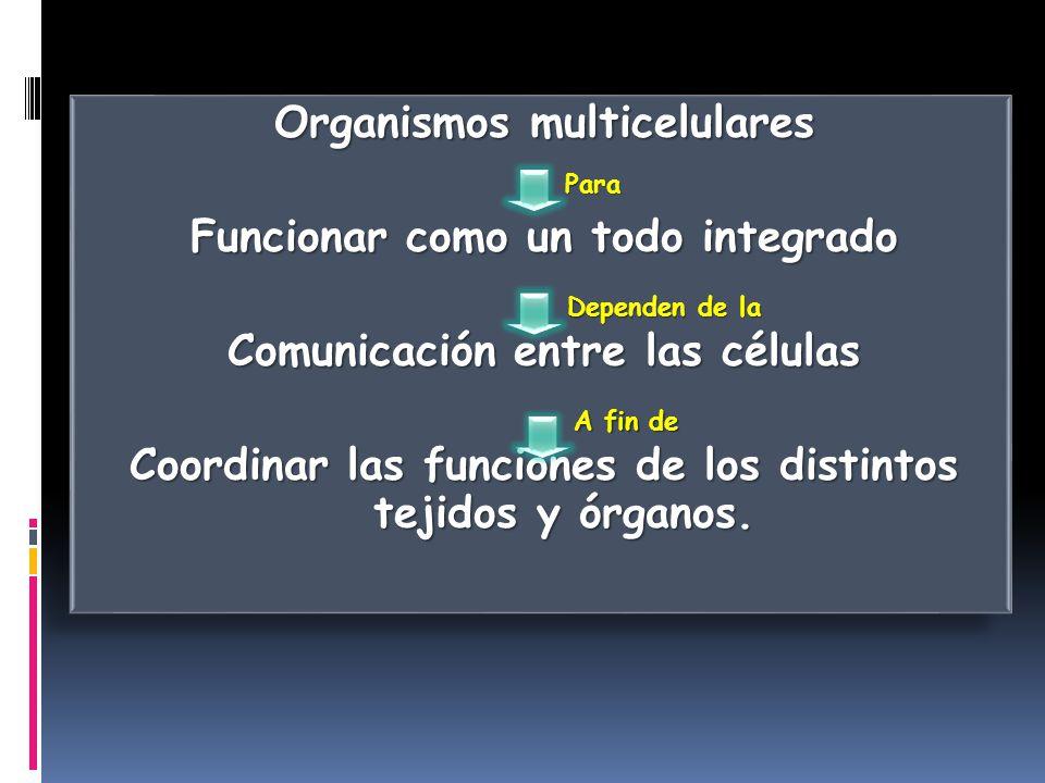 Organismos multicelulares Funcionar como un todo integrado