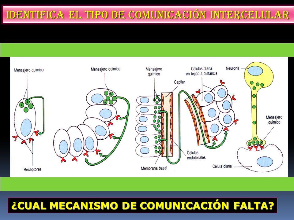 Identifica el tipo de comunicación intercelular