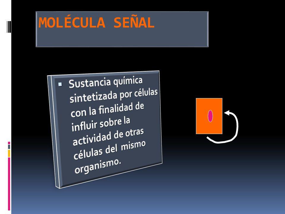 MOLÉCULA SEÑAL Sustancia química sintetizada por células con la finalidad de influir sobre la actividad de otras células del mismo organismo.