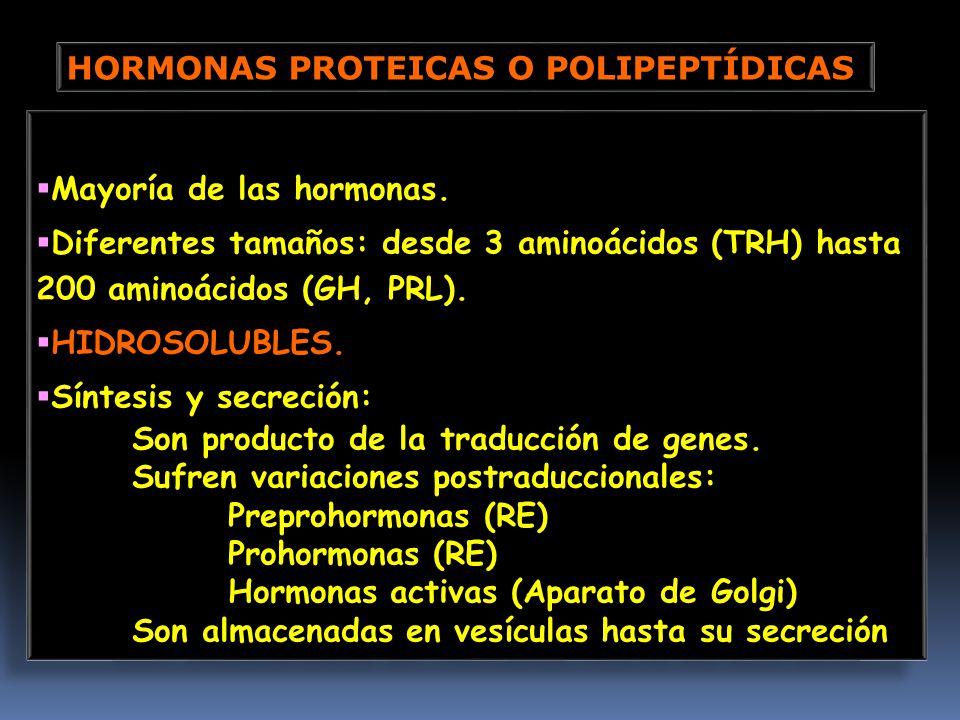 HORMONAS PROTEICAS O POLIPEPTÍDICAS