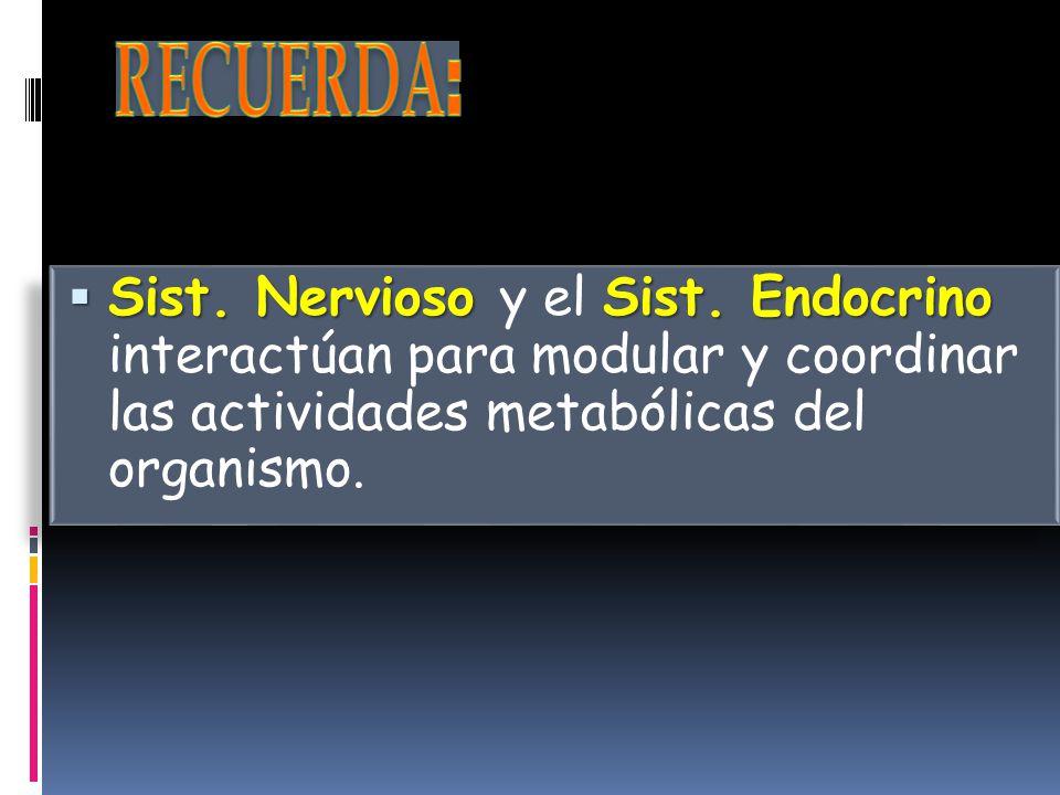 RECUERDA: Sist. Nervioso y el Sist.