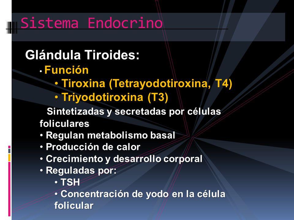 Sistema Endocrino Glándula Tiroides: Tiroxina (Tetrayodotiroxina, T4)