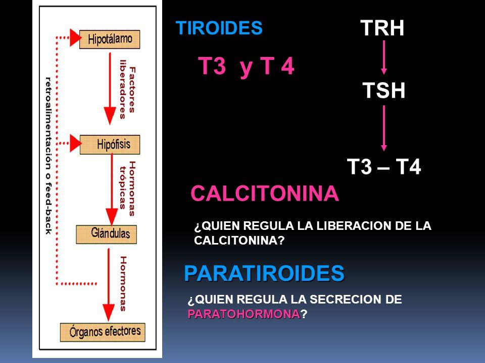 T3 y T 4 TRH TSH T3 – T4 CALCITONINA PARATIROIDES TIROIDES