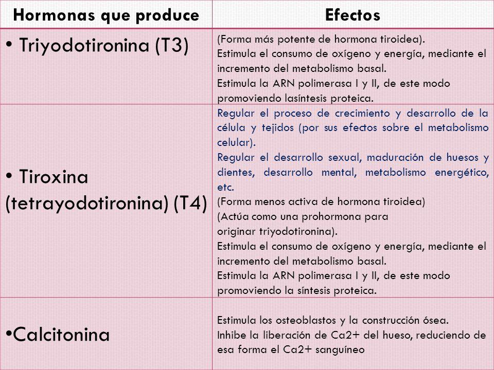 Tiroxina (tetrayodotironina) (T4)