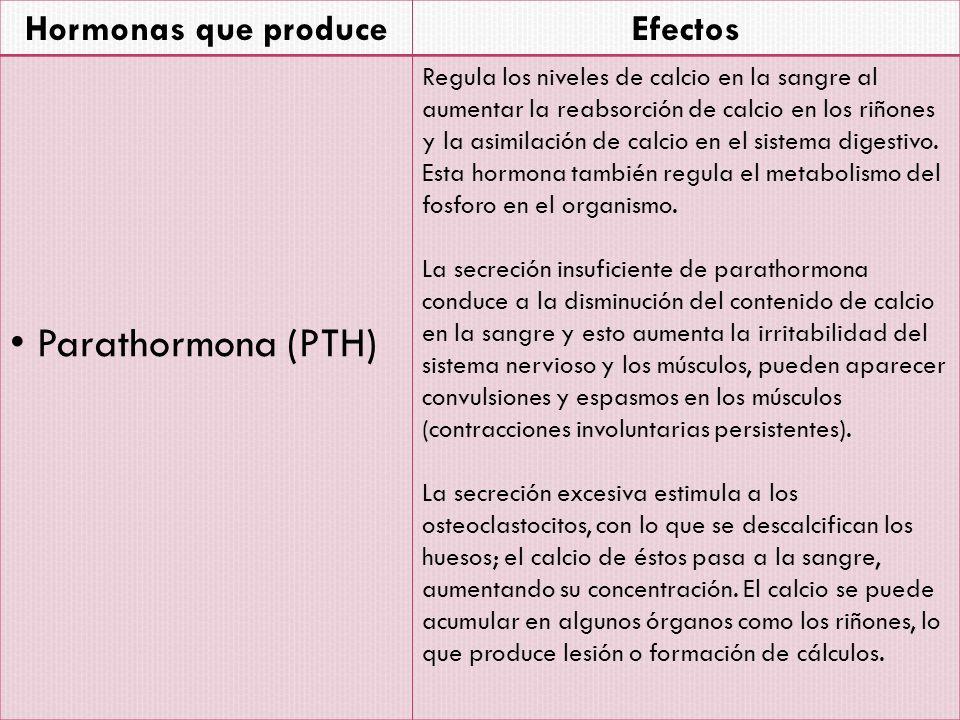 Parathormona (PTH) Hormonas que produce Efectos
