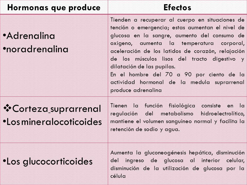 Los mineralocoticoides
