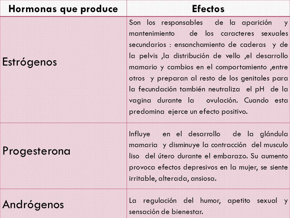 Estrógenos Progesterona Andrógenos Hormonas que produce Efectos