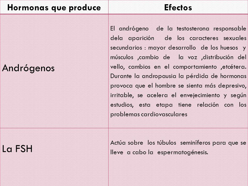 Andrógenos La FSH Hormonas que produce Efectos