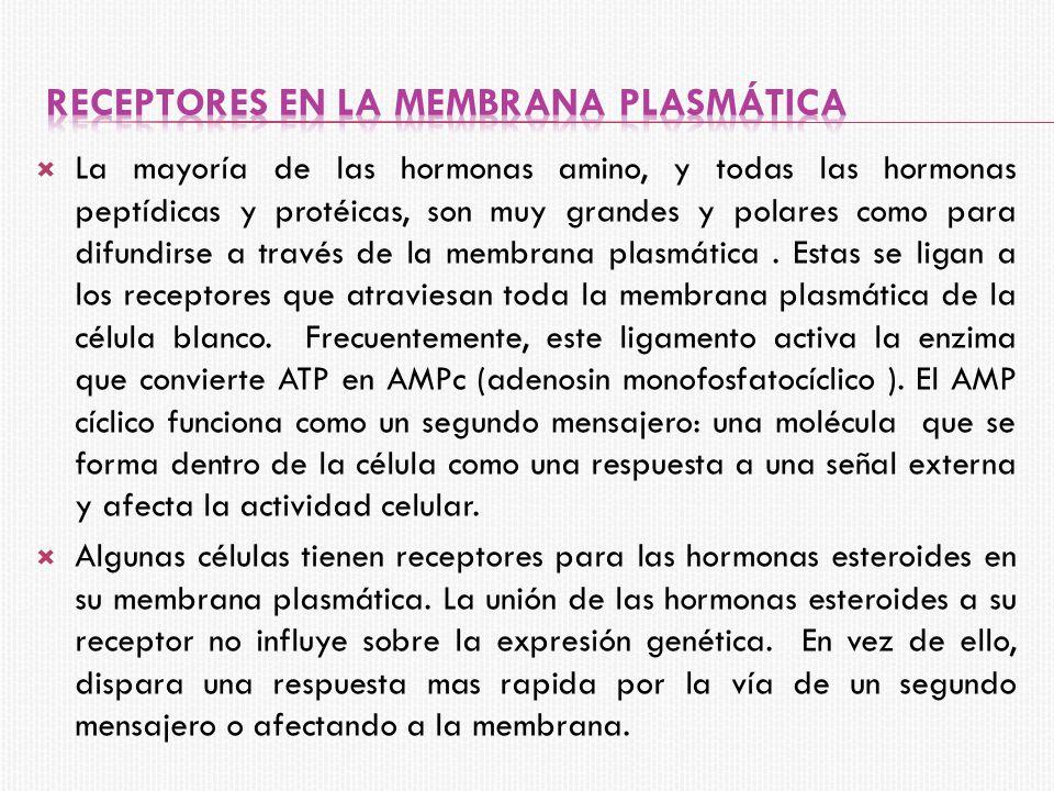 Receptores en la membrana plasmática