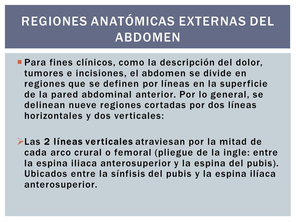 Regiones anatómicas externas del abdomen