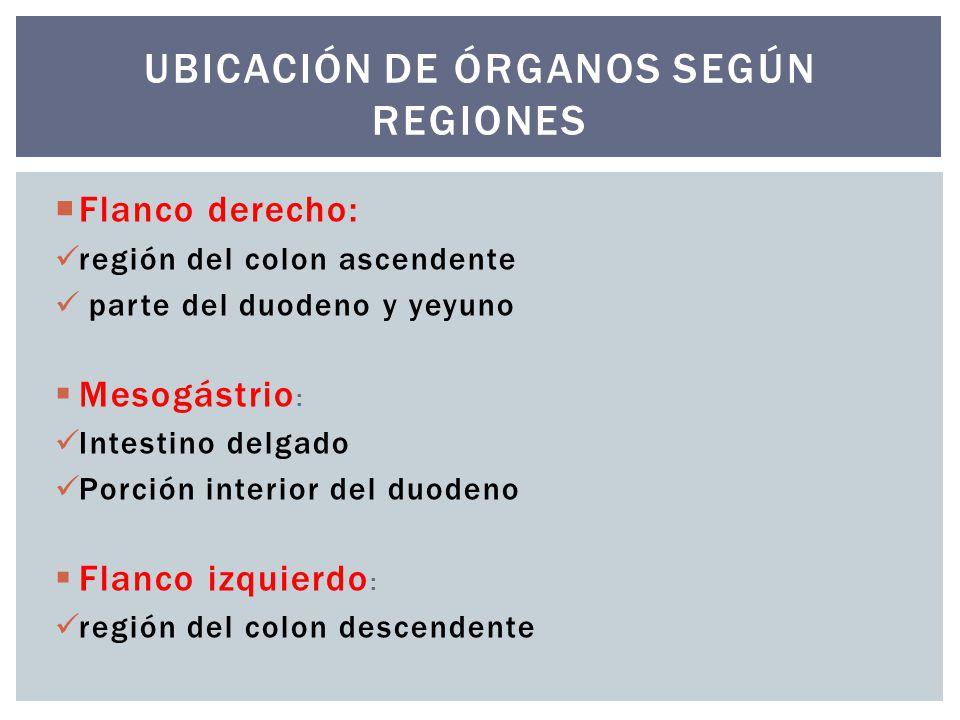 Ubicación de órganos según regiones