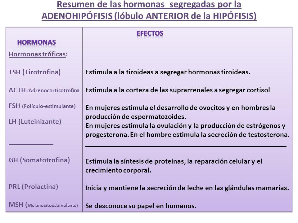 Resumen de las hormonas segregadas por la ADENOHIPÓFISIS (lóbulo ANTERIOR de la HIPÓFISIS)