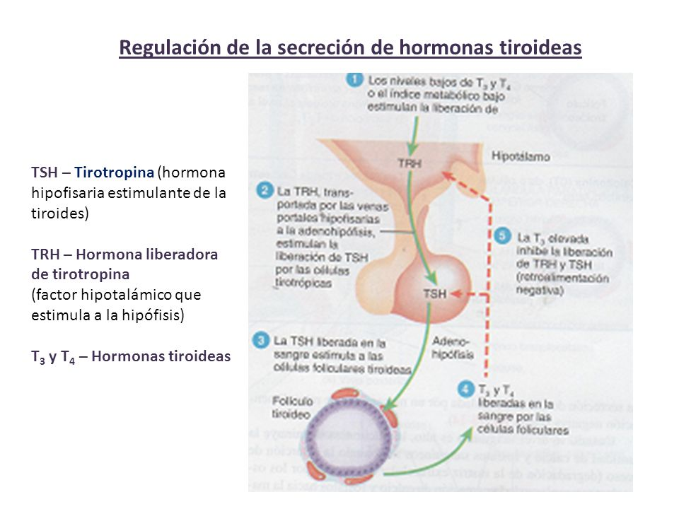 Regulación de la secreción de hormonas tiroideas