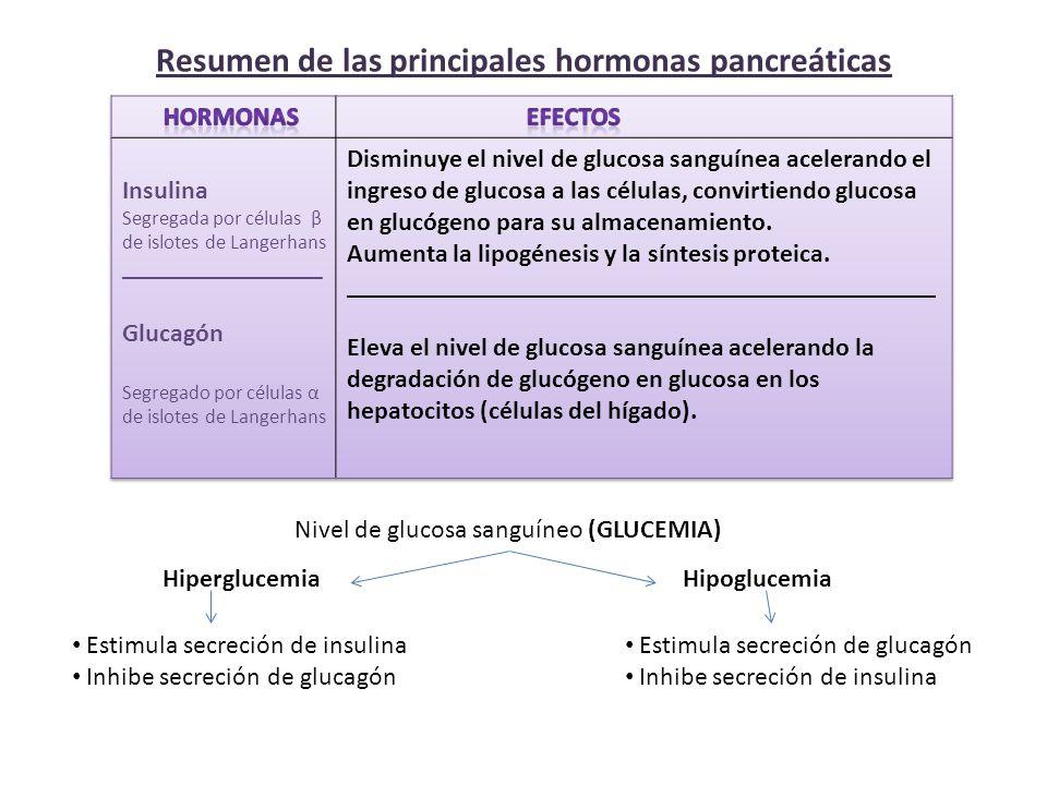 Resumen de las principales hormonas pancreáticas