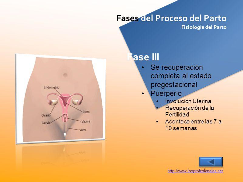 Fase III Fases del Proceso del Parto