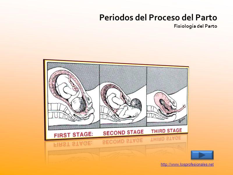 Periodos del Proceso del Parto