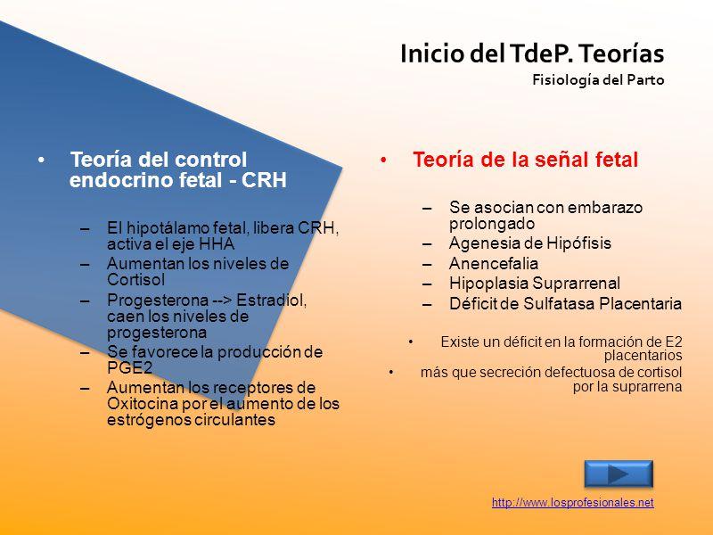 Inicio del TdeP. Teorías