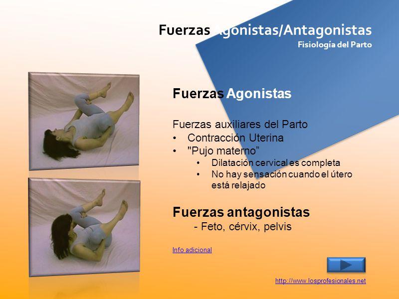 Fuerzas Agonistas/Antagonistas