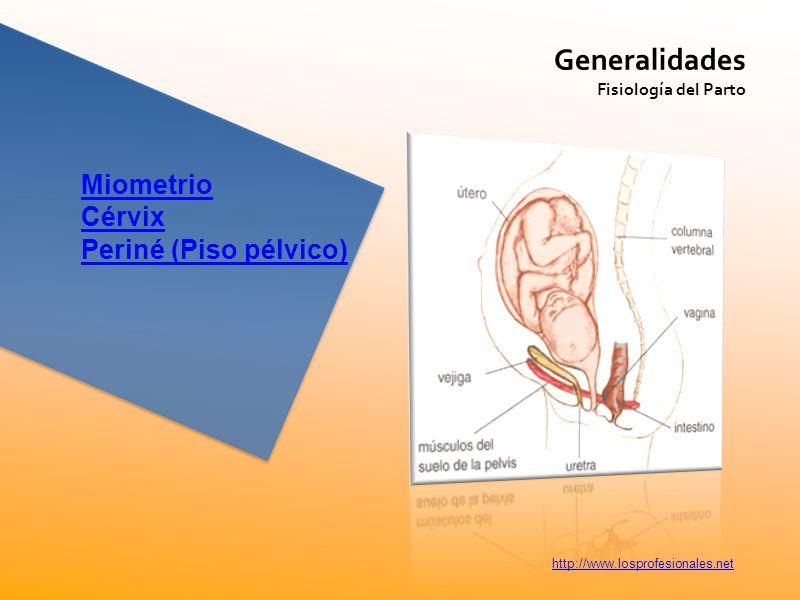 Generalidades Miometrio Cérvix Periné (Piso pélvico)