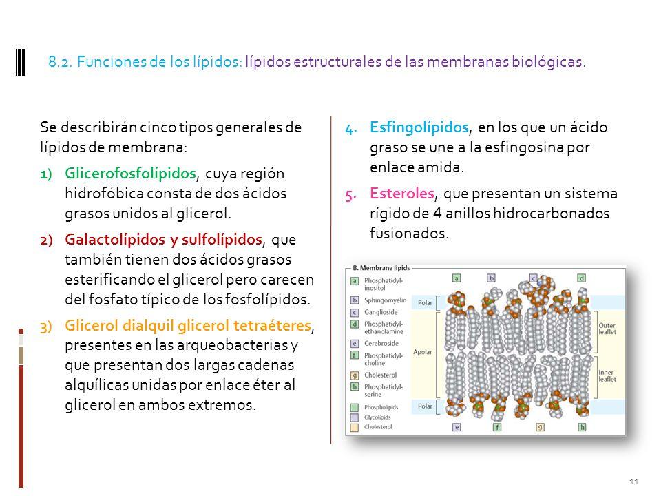 8.2. Funciones de los lípidos: lípidos estructurales de las membranas biológicas.