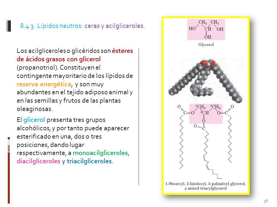 8.4.3. Lípidos neutros: ceras y acilgliceroles.