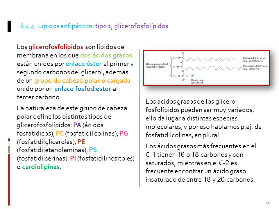 8.4.4. Lípidos anfipáticos: tipo 1, glicerofosfolípidos.