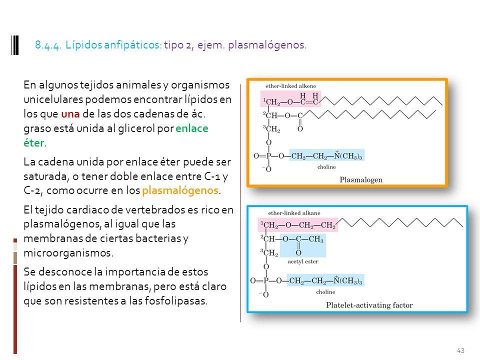 8.4.4. Lípidos anfipáticos: tipo 2, ejem. plasmalógenos.