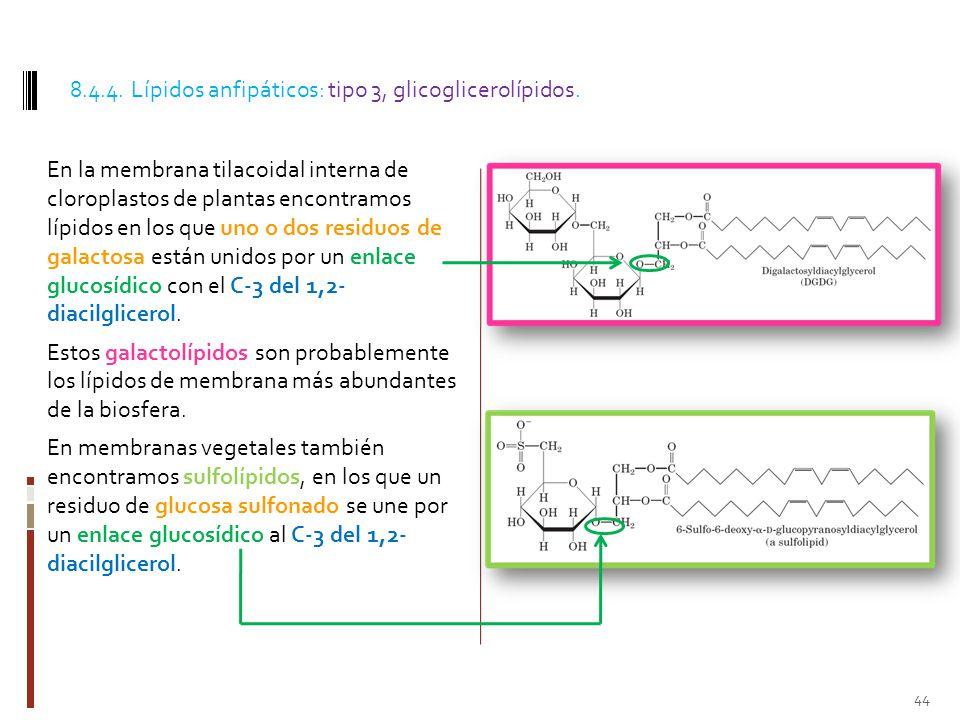 8.4.4. Lípidos anfipáticos: tipo 3, glicoglicerolípidos.