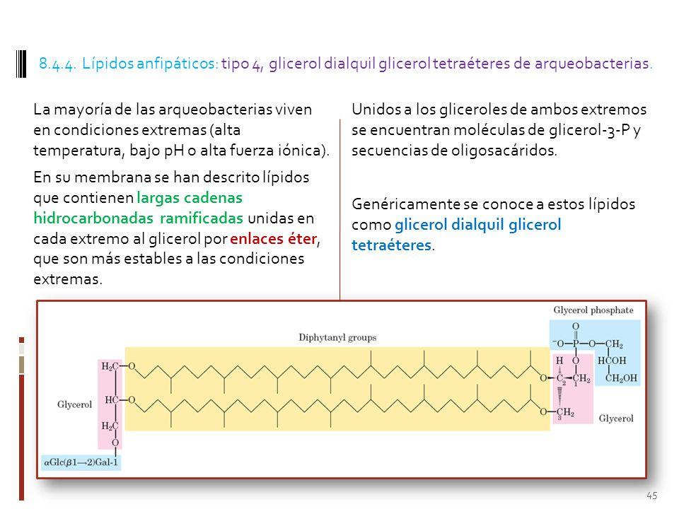 8.4.4. Lípidos anfipáticos: tipo 4, glicerol dialquil glicerol tetraéteres de arqueobacterias.