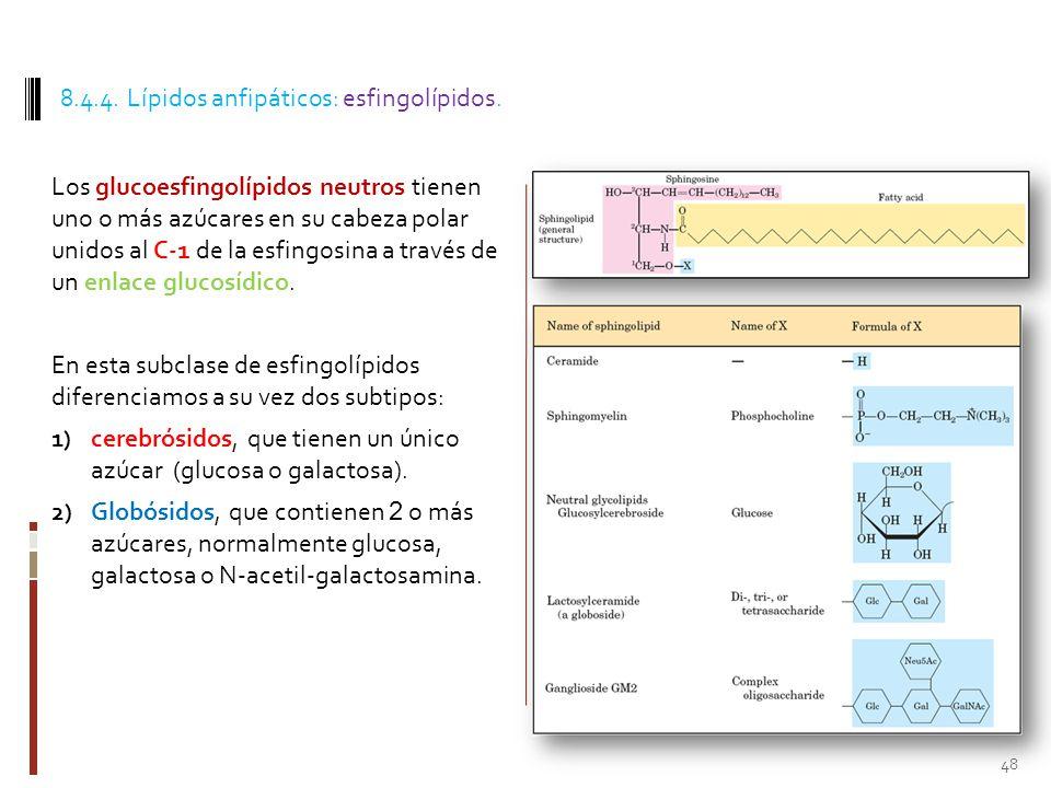 8.4.4. Lípidos anfipáticos: esfingolípidos.