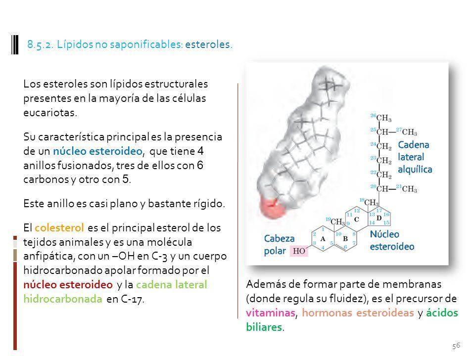 8.5.2. Lípidos no saponificables: esteroles.