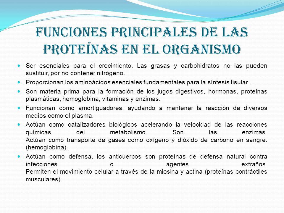 Funciones principales de las proteínas en el organismo