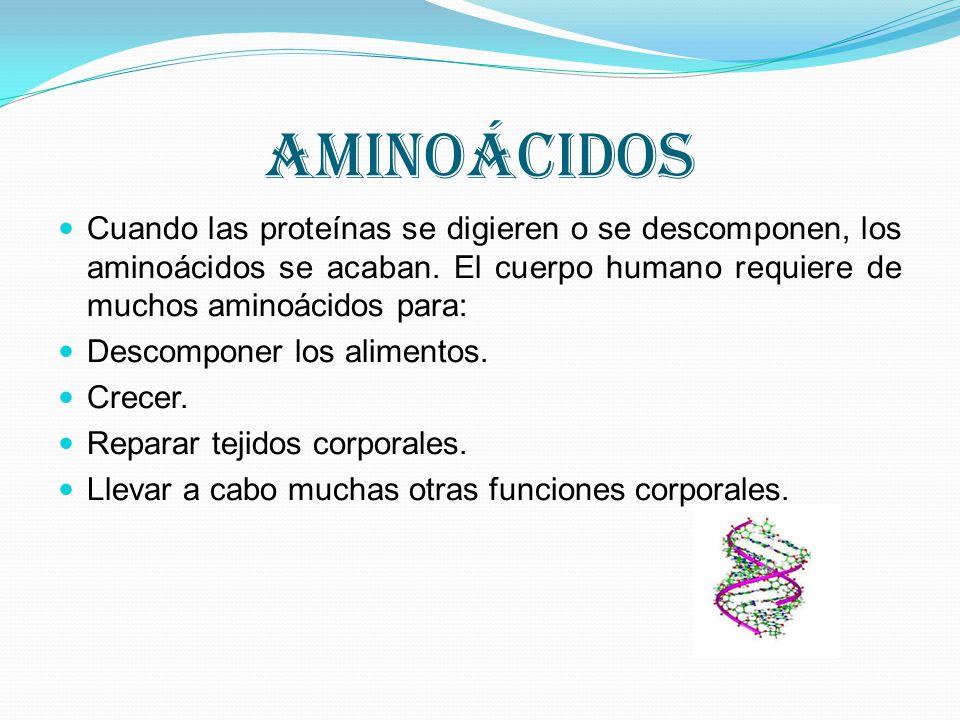 aminoácidos Cuando las proteínas se digieren o se descomponen, los aminoácidos se acaban. El cuerpo humano requiere de muchos aminoácidos para: