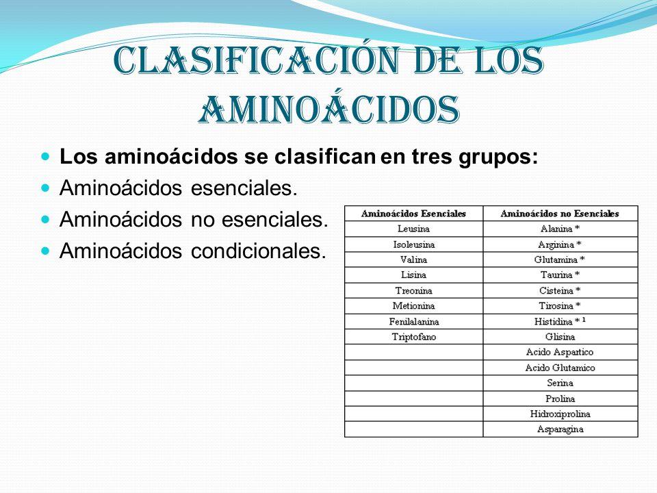 Clasificación de los aminoácidos