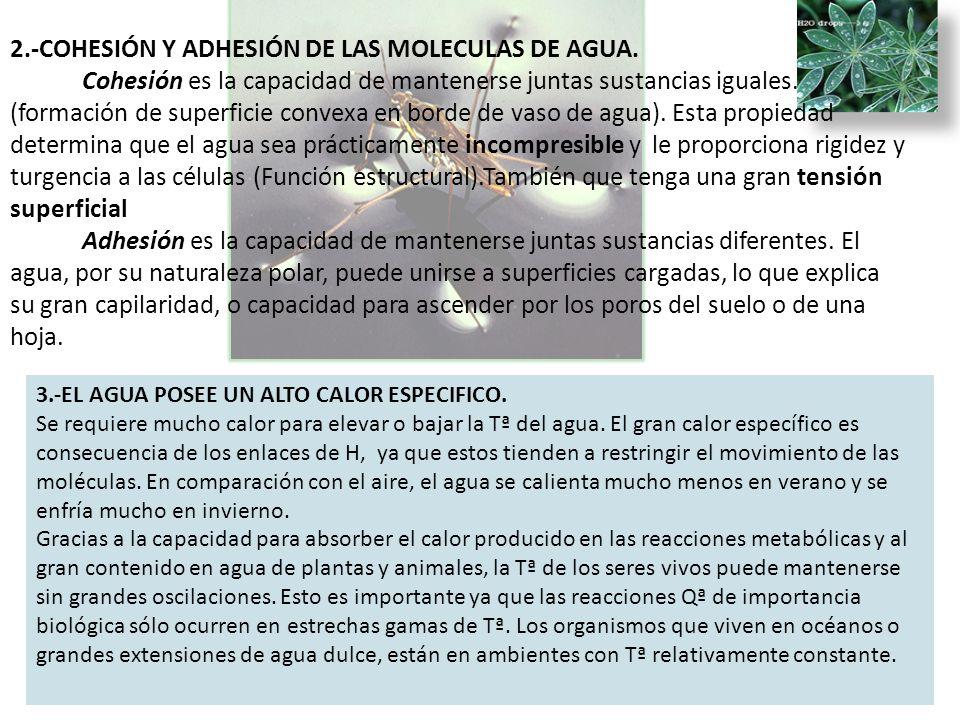 2. -COHESIÓN Y ADHESIÓN DE LAS MOLECULAS DE AGUA