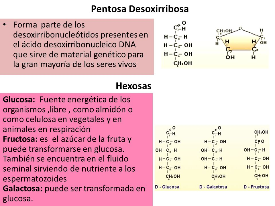 Pentosa Desoxirribosa