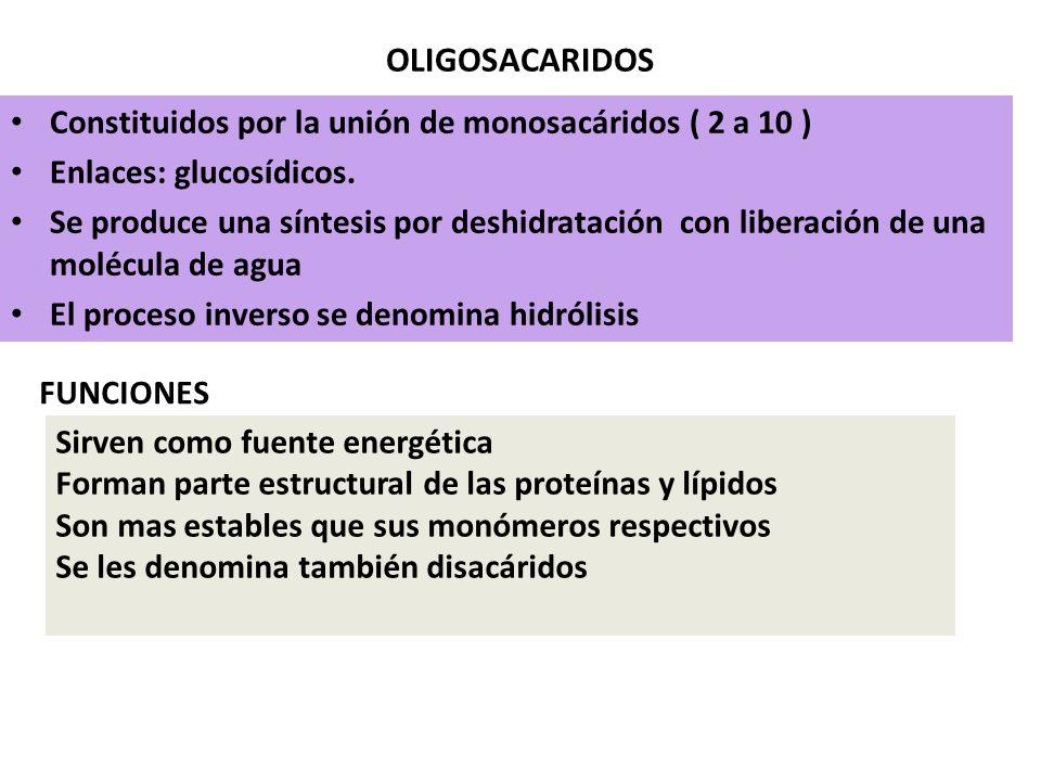 OLIGOSACARIDOS Constituidos por la unión de monosacáridos ( 2 a 10 )