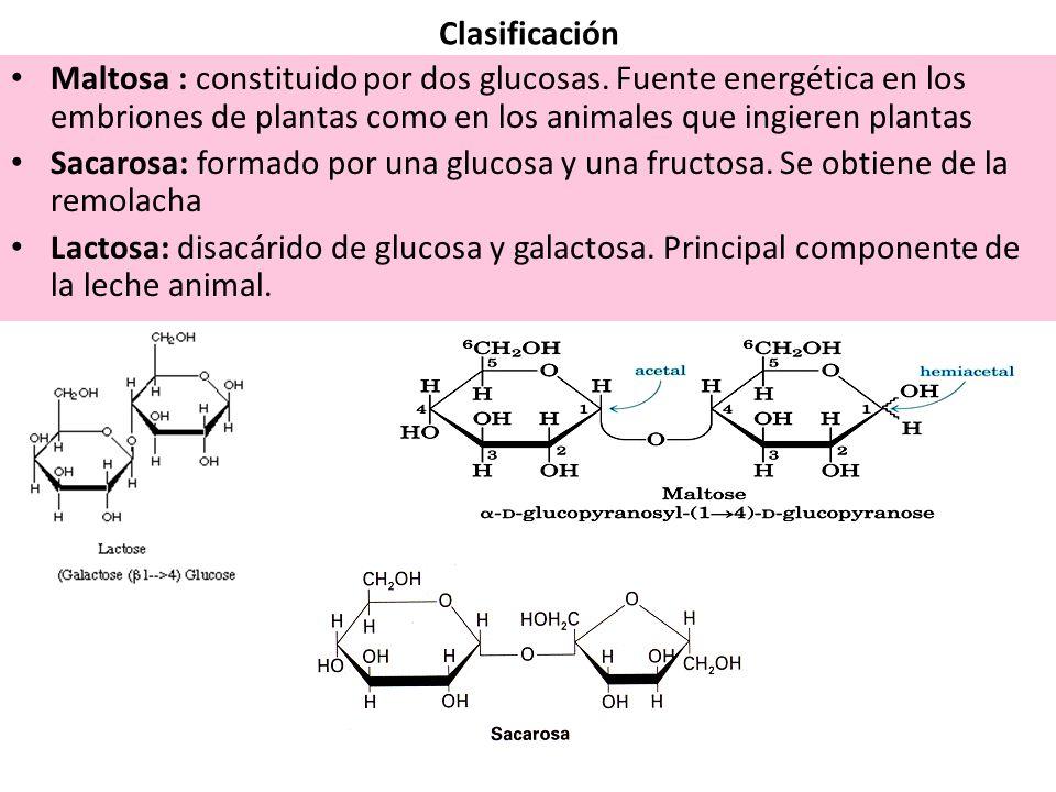 Clasificación Maltosa : constituido por dos glucosas. Fuente energética en los embriones de plantas como en los animales que ingieren plantas.