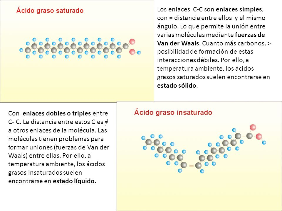 Los enlaces C-C son enlaces simples, con = distancia entre ellos y el mismo ángulo. Lo que permite la unión entre varias moléculas mediante fuerzas de Van der Waals. Cuanto más carbonos, > posibilidad de formación de estas interacciones débiles. Por ello, a temperatura ambiente, los ácidos grasos saturados suelen encontrarse en estado sólido.