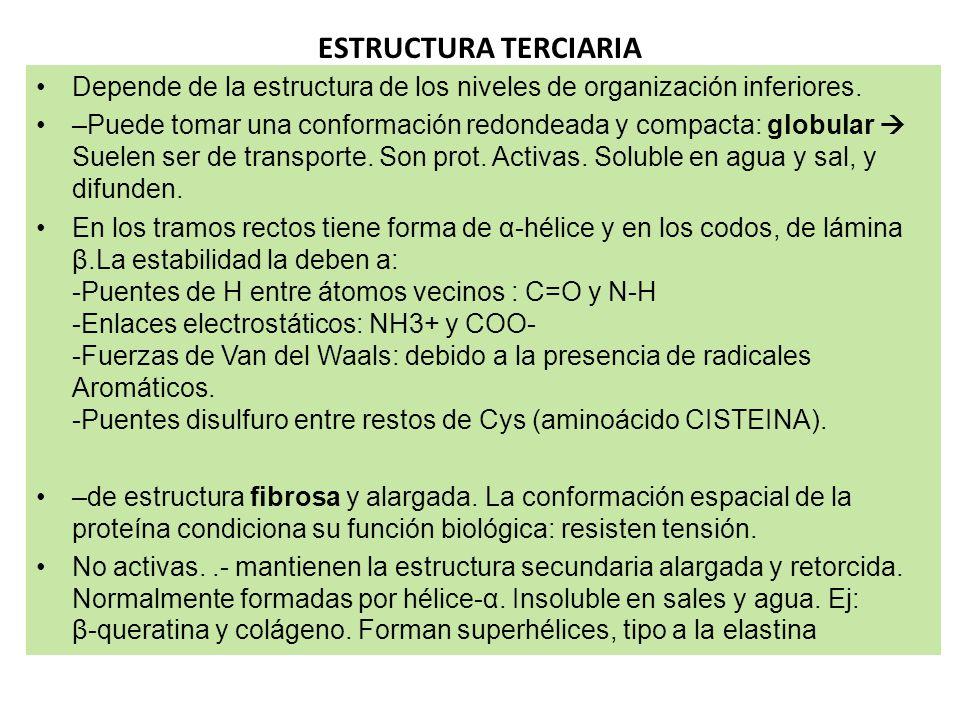 ESTRUCTURA TERCIARIA Depende de la estructura de los niveles de organización inferiores.