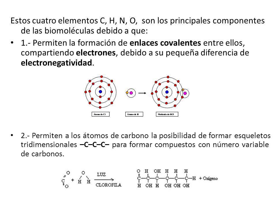 Estos cuatro elementos C, H, N, O, son los principales componentes de las biomoléculas debido a que: