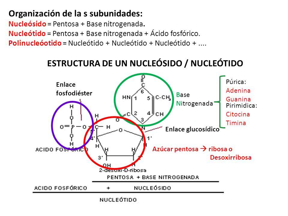 Organización de la s subunidades: