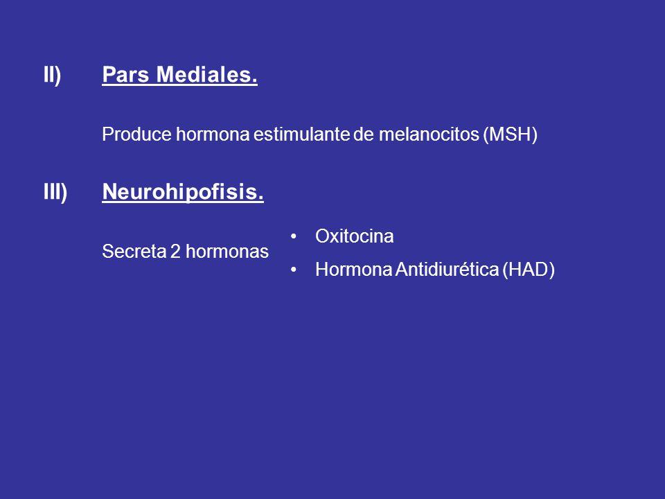 II) Pars Mediales. Neurohipofisis.