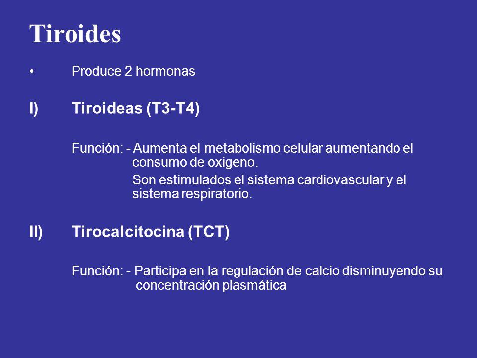 Tiroides I) Tiroideas (T3-T4) Tirocalcitocina (TCT) Produce 2 hormonas