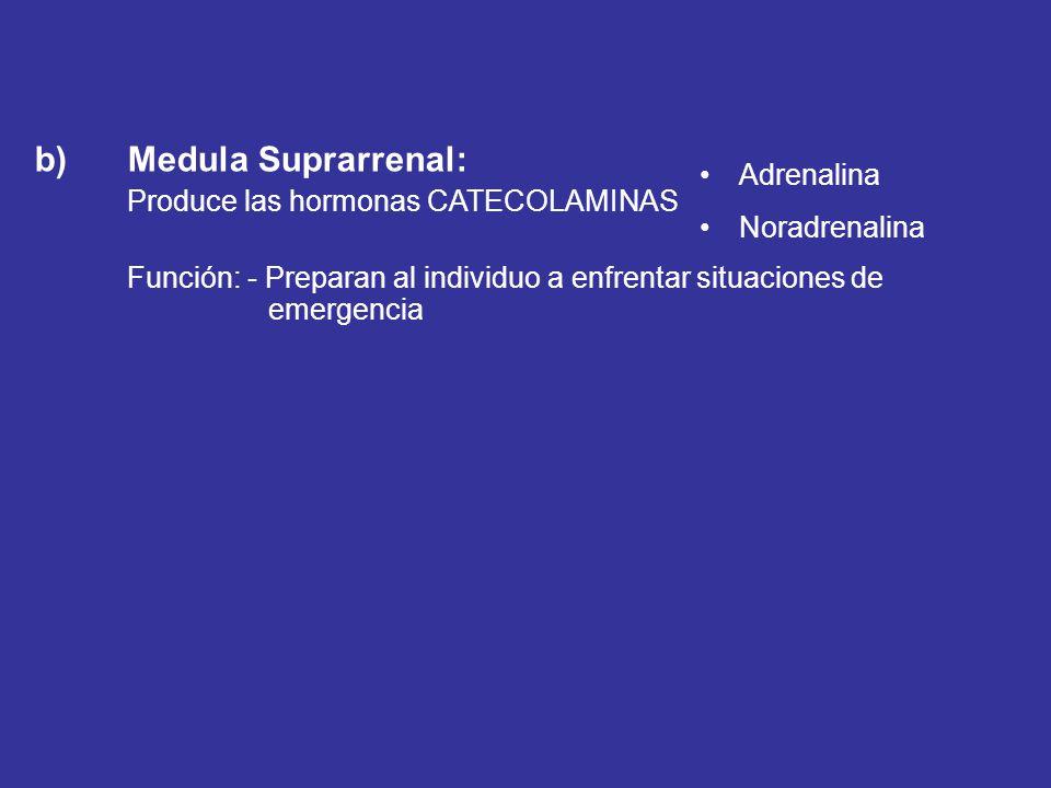 b) Medula Suprarrenal: